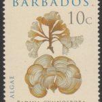 Algae - Barbados SG1323 - Algae 10c - Padina Gymnospora