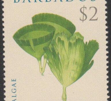 Algae - Barbados SG1326 - Algae $2 - Udotea Conglutinata