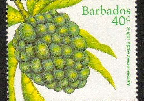 Barbados SG1117