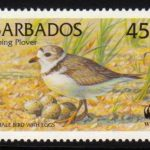 Barbados SG1135