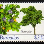 Barbados SG1277