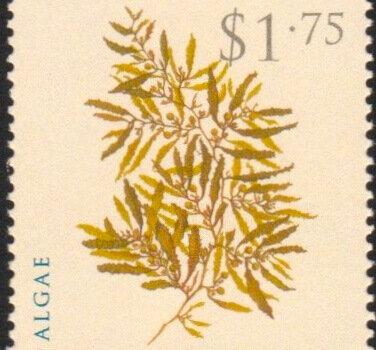 Barbados SG1325