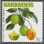 Barbados SG1359 - Local Fruits of Barbados - 5c Golden Apple