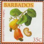 Local Fruits of Barbados - 35c Cashew - Barbados SG1361