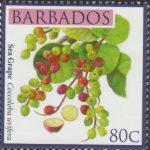 Local Fruits of Barbados - 80c Sea Grape - Barbados SG1365