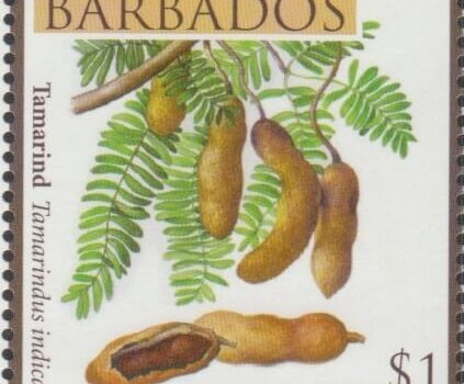 Fruits of Barbados - $1 Tamarind - Barbados SG1366