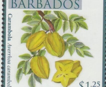 Local Fruits of Barbados - $1.25 Carambola - Barbados SG1367