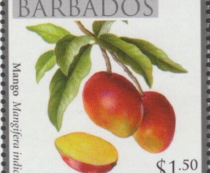 Local Fruits of Barbados - $1.50 Mango - Barbados SG1368