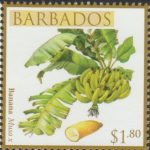 Local Fruits of Barbados - $1.80 Banana - Barbados SG1369