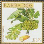 Local Fruits of Barbados - $1.80 Banana - Barbados SG1369