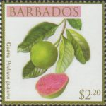 Local Fruits of Barbados - $2.20 Guava - Barbados SG1370