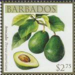 Local Fruits of Barbados - $2.75 Avocado - Barbados SG1371