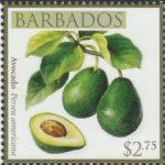 Local Fruits of Barbados - $2.75 Avocado - Barbados SG1371
