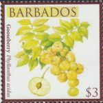 Local Fruits of Barbados - $3 Gooseberry - Barbados SG1372