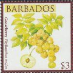 Local Fruits of Barbados - $3 Gooseberry - Barbados SG1372