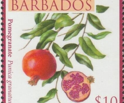 Local Fruits of Barbados - $10 Pomegranate - Barbados SG1374