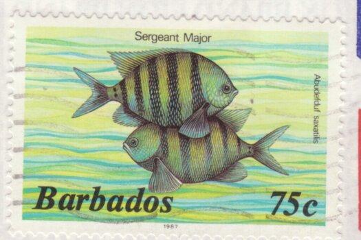 Barbados 75c Sargent Major stamp 1987
