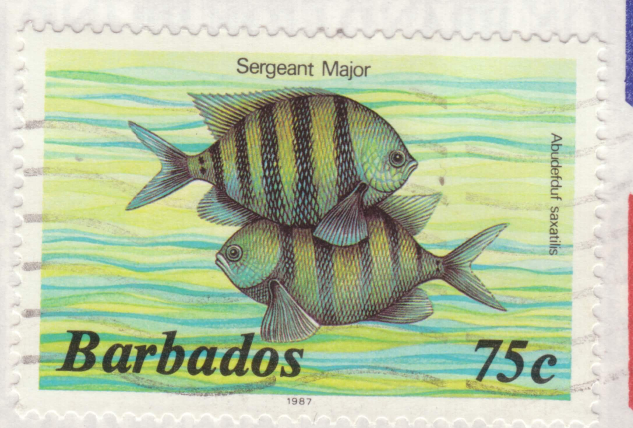 Barbados 75c Sargent Major stamp 1987
