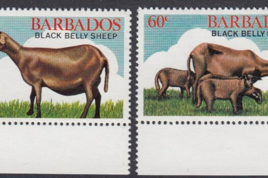 Barbados SG693-696 | Black Belly Sheep