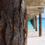 Under the boardwalk, Carlisle Bay, Barbados
