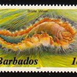 Barbados SG763B