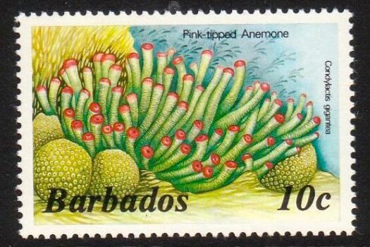 Barbados SG766A