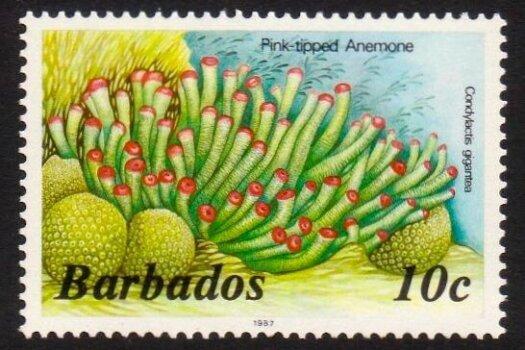 Barbados SG797B