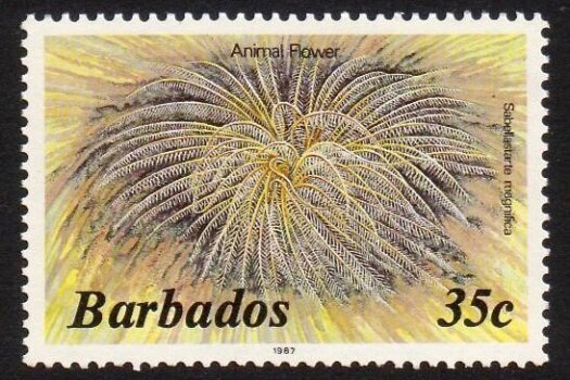 Barbados SG800B
