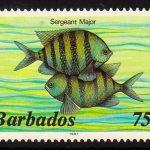 Barbados SG805B