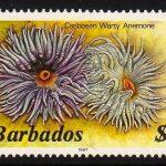 Barbados SG806B