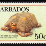 Barbados SG885