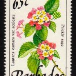 Barbados SG899