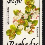Barbados SG903